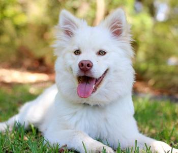 dog-sitter-hicksville-NY