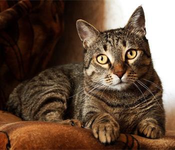cat sitter Jerico, Plainview, Hicksville, NY