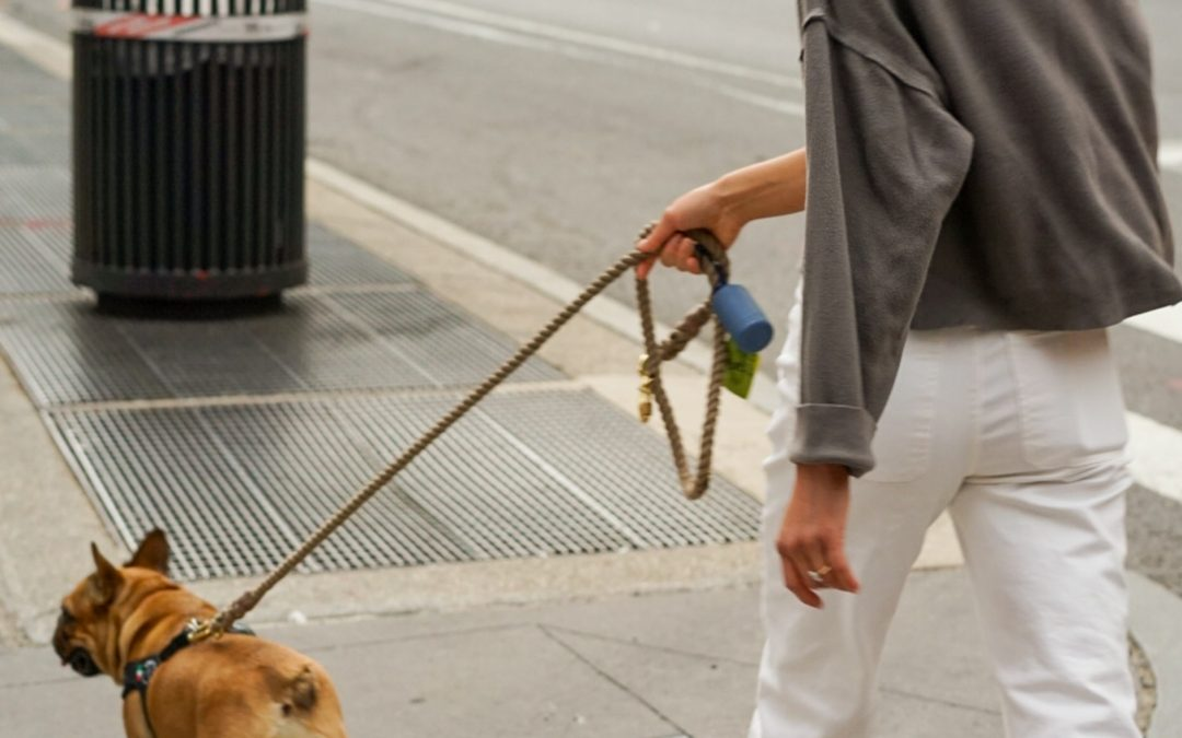 4 Benefits Of Hiring A Dog Walker