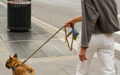4 Benefits Of Hiring A Dog Walker